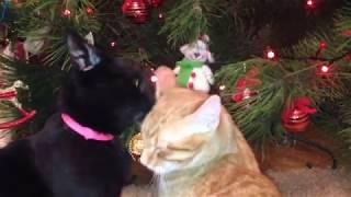 Первая елка в жизни моих котов