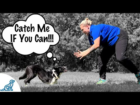 How To Get Your Dog Under Control - Professional Dog Training Tips