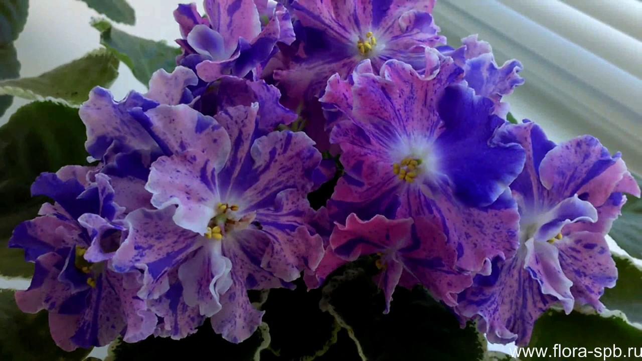 Купить комнатные растения в магазине санкт-петербурга (спб) достаточно легко: выберите растение в каталоге с фотографиями, уточните наличие цветов и оформите заказ. Интернет-магазин комнатных растений и цветов является виртуальной витриной реального магазина по продаже комнатных.
