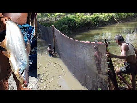 Net Fishing – NEW Way To Catch Fish By Net Fishing – Nets Fishing Big Catch Fish Fresh Water