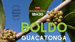 Boldo e Guaçatonga: Conversando sobre plantas medicinais com Marcos Guião