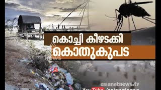 Kochi under mosquito attack