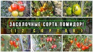 Засолочные сорта помидор!  Обзор , и вкусовые характеристики!