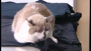 Чем отчистить одежду от шерсти