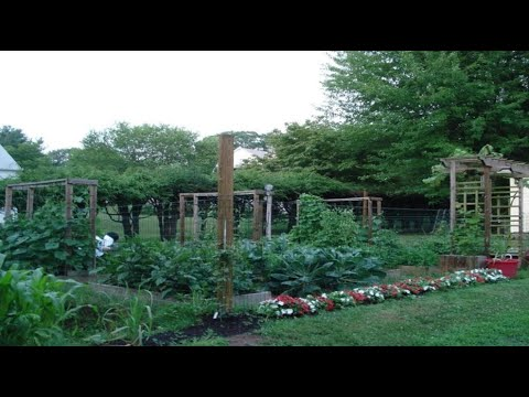Charming Aimanu0027s Mom Backyard Garden: Grow Your Own Organic Vegetables U0026 Ideas    Connecticut USA