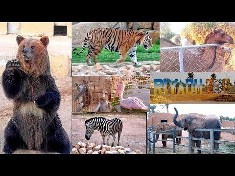 Riyadh National Zoo -2017 (Saudi Arabia)    حديقة حيوان الرياض