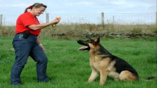 Alpha Dog Behavior Dog Behavior Seminars