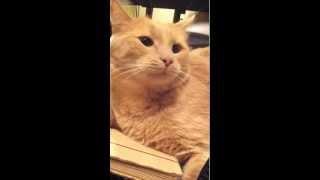 Нехер злить кота.