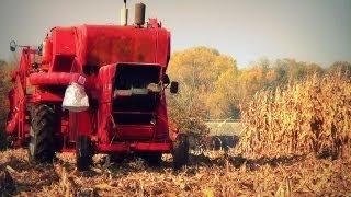 Kukurydza bez przystawki Massey Ferguson 86 ☆ 100 film ㋡ MafiaSolec