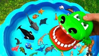 Learn Colors with Sea Creatures and Wild Animals Names Sharks For Kids