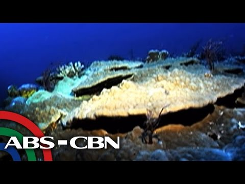 Bandila: The Philippines' underwater treasure