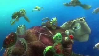 Finding Nemo- Turtle Scene