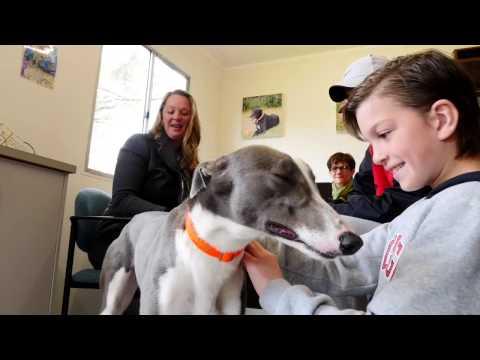 Australian Olympian Michelle Brogan Adopts a Greyhound