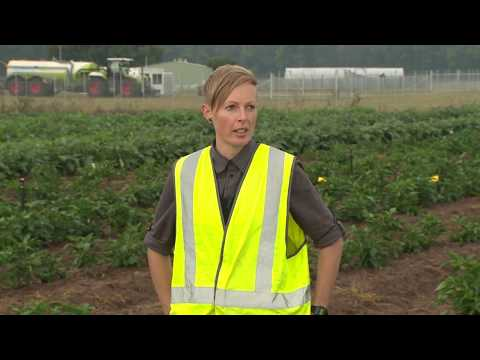 Online vegetable marketing promotes sustainable production