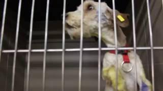 Як у Львові бездомні собаки перебувають на карантині