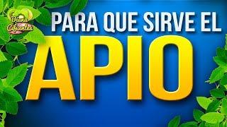 Para Que Sirve El Apio - Propiedades, Beneficios Y Contraindicaciones Del Apio