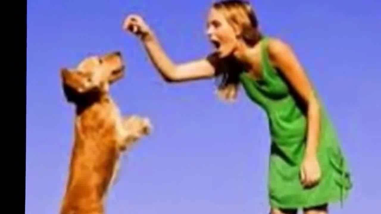 Royal Canin Labrador Retriever Dog Food Review Dog Food For