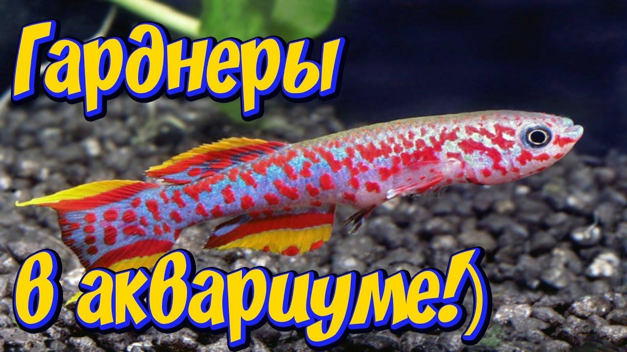 Аквариумные рыбки в интернет-магазине aqua-shop. Купить рыбок для аквариума недорого с доставкой по россии.