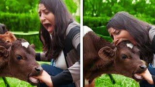 Они Зря Сделали Это Случаи с Животными Снятые на Камеру