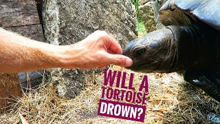 cpr-it-s-possible-hydration-for-tortoises