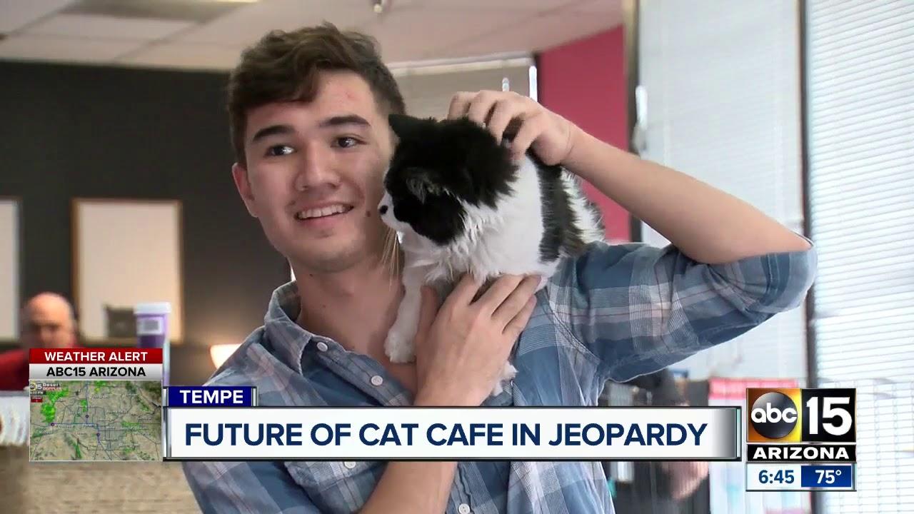Cat Cafe Tempe