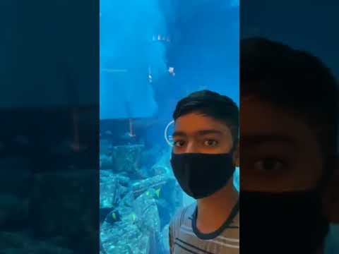 My Dubai Tour / Jumairah Palm Island / Atlantis Hotel / Burj Al Arab Hotel