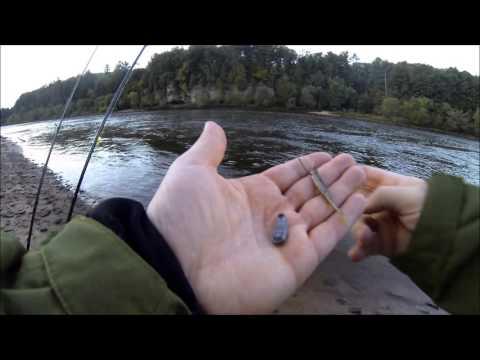 Dropshot Walleye Fishing 10/3/2015 [Wisconsin Dells Dam, Wisconsin River]