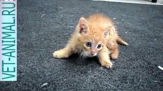 Отец котенка с шестью ногами пришел в гости и нажрался. Шок!