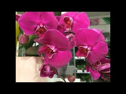 Орхидеи по 50 и по 100 руб !!! Фуд Сити Калужское ш., 22-й км, 10 Магазин орхидей JMP и Горкунов