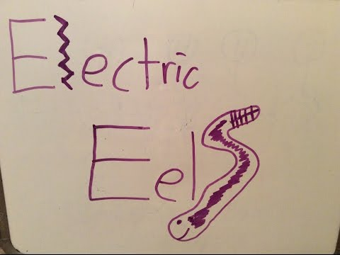 15 Second Electric Eels