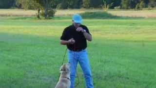 The electric collar and Positive Reinforcement  Lesson 2