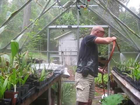 Watering Palm Seedlings