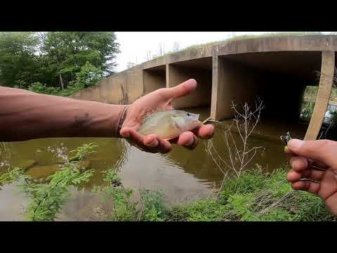 Fishing Roadside Creeks In Oklahoma