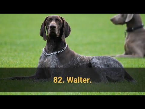 🐕 TOP 100 BEST Dog Names For Male – Dog Name Ideas 2020!
