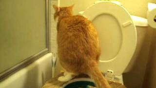 Cat using toilet seat - кот сам ходит в туалет 2