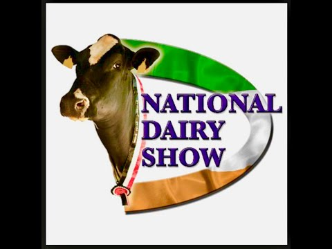 Mature Holstein Class.2018 National Dairy Show.Cork Ireland