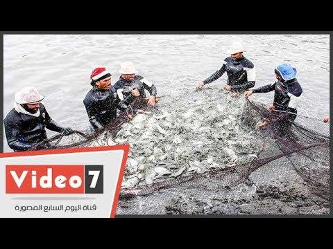مشروع الإستزراع السمكي  شرق قناة السويس يوفر 10 ألاف فرصة عمل  - 20:21-2017 / 5 / 23