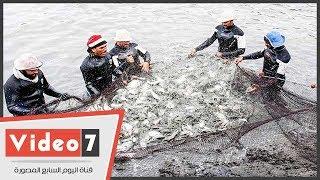 مشروع الإستزراع السمكي  شرق قناة السويس يوفر 10 ألاف فرصة عمل