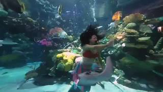 Up close with a live Mermaid in 3D VR180 at the Silverton Hotel Las Vegas.