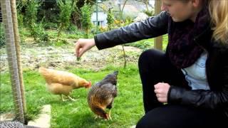 C'est amusant une poule sauteuse! - It's funny a jumping hen!  ;-)