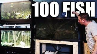 ADDING 100 FISH