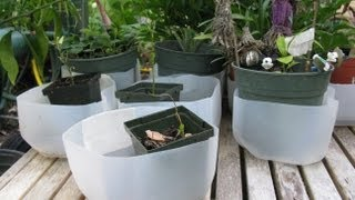 How To Make Empty Milk Jug As Plant Drain Tray Container Gardening Tips DIY Project Jazevox Video