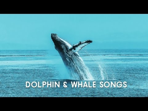 Dolphin and Whale Songs with Beautiful Meditation Music - 1 Hour