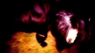 черные собаки ночью