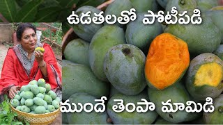 I love the mangos/ organic garden/village life/Live village life with me in Hyderabad/village food