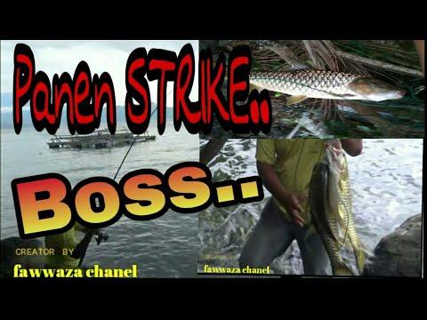 #mancingsasau #danausingkarak Mancing ikan SASAU di danau SINGKARAK