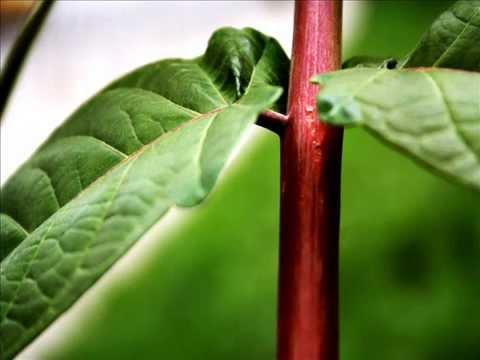 Reproduccion asexual de las plantas eduteca para
