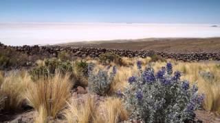 Bolivia Chile - Altiplano to Atacama Explorer