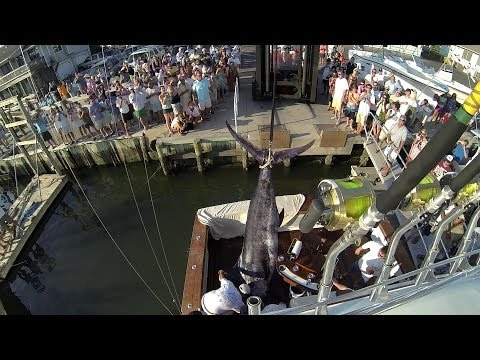 821.2 Lb HUGE Blue Marlin On The COVERAGE - 2014 Cape Fear Winner