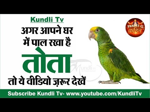 Benefits Of Parrot In Home | Parrot Vastu | Vastu Tips For Home I VASTU SHASTRA